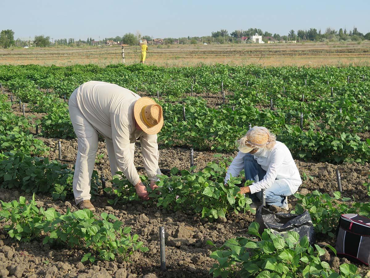 Лаборатория сотрудничает с сельхозпроизводителями